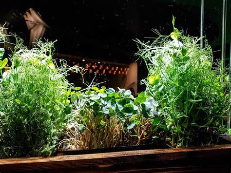 Windowsill Herb Garden Containers by Herb Garden Gardening Code