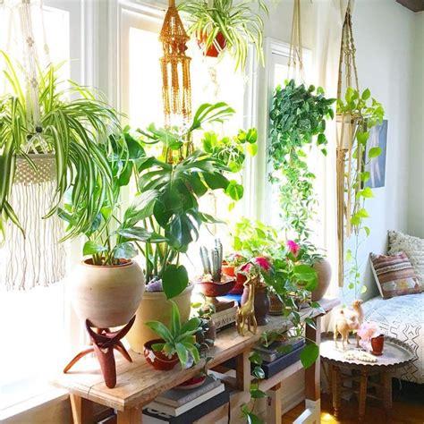 Decor Plants Flashback Best 25 Bedroom Plants Ideas On Plants In