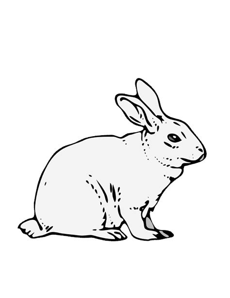 rabbit coloring pages printable free coloring pages of rabbit