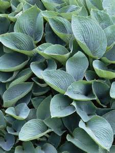 the best shade loving plants plants for shade hgtv
