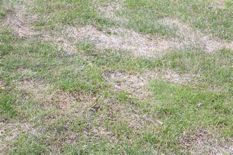 Vertrockneten Rasen Retten by Vertrocknete Pflanzen Aufp 228 Ppeln So Retten Sie Verdorrte