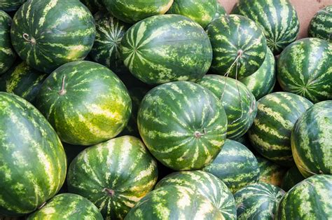 Water Melon health benefits of watermelon recipes dr axe