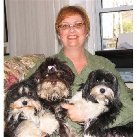 havanese breeders ontario havanese breeder havanese breeder in kettle and stony point ontario