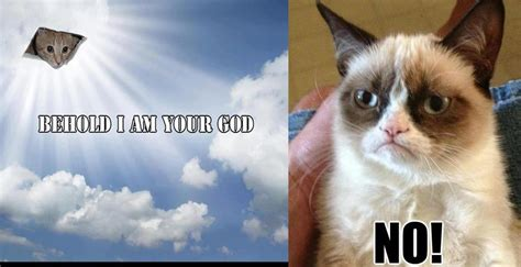 grumpy cat and god no grumpy cat meme see funny