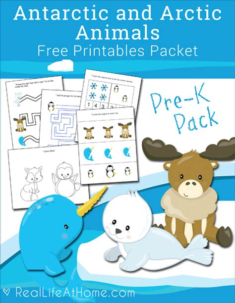 free antarctic and arctic animals printables packet for