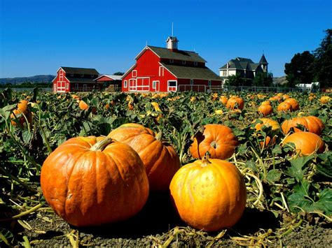celebrate fall with classic hayrides and a pumpkin patch