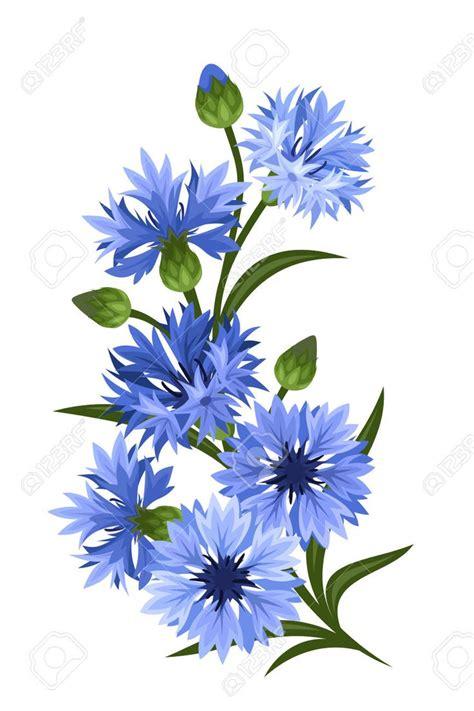corn flower blue flower inspiration 301 best chrpy cornflowers čekanka chicori images on