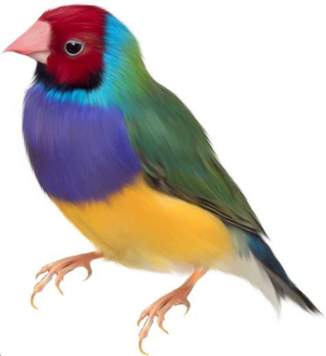 imagenes de aves sin fondo r 252 yada kuş beslemek ruyatabirleri com
