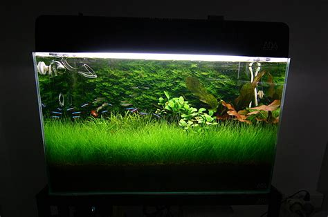 aquascaping ada ada 60 x 30 x 36 cm aquascape 2005
