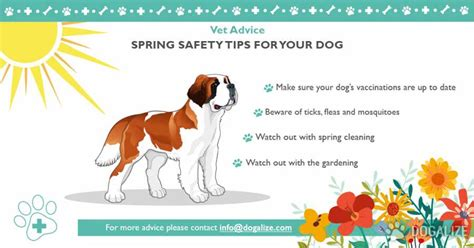 spring tips spring safety tips for your pets dogalize