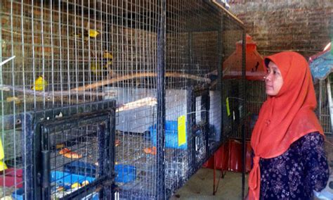 Tempat Kulakan Pakan Burung Jogja terbungkus kardus kecil tanpa pakan ratusan burung
