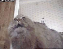 ptsd gif cat animated gif