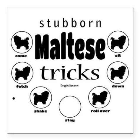 stubborn pug tricks 1000 images about stubborn tricks on chow chow cocker spaniel and
