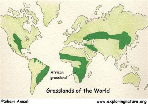 african veldt  savanna