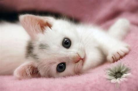 imagenes surrealistas de gatos gatitos lindos con frases bonitas de amor para descargar