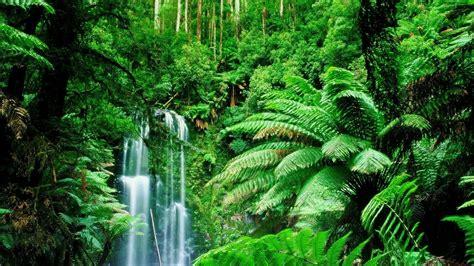 Tropical Jungle tropical jungle wallpaper wallpapersafari