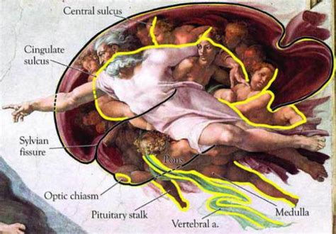 sistine chapel tattoo neurologists discover michelangelo s paintings of god with