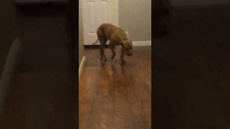 Pooping In House by Embarrassed After Taking Big In House