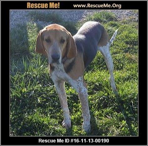 shih tzu rescue sc missouri rescue adoptions rescuemeorg upcomingcarshq