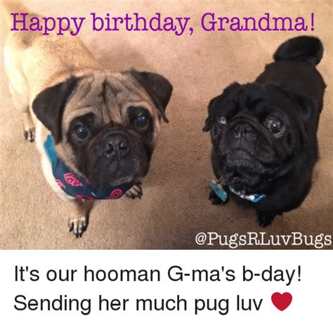 Birthday Pug Meme - happy birthday grandma bugs it s our hooman g ma s b day