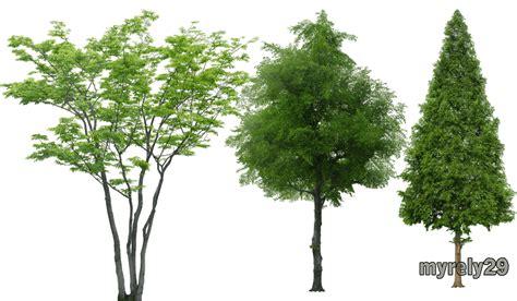 imagenes png arboles colecci 243 n de 193 rboles y arbustos png con fondo transparente