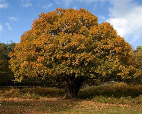 think and create oak tree