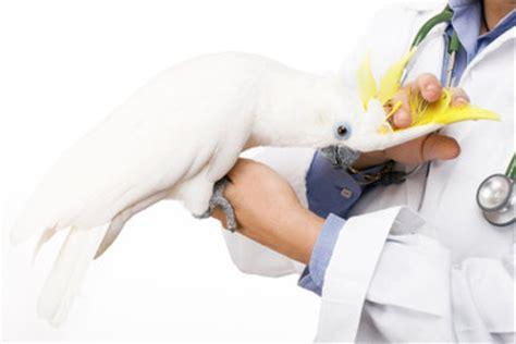 Praktikum Bewerbung Tierheim Bewerbung F 252 R Ein Tierarztpraktikum So Beeindrucken Sie Mit Erfahrung