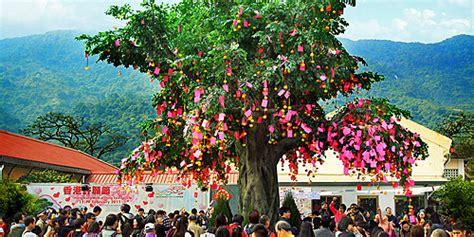 lam tsuen wishing tree new year lam tsuen wishing trees hong kong s trees of luck i