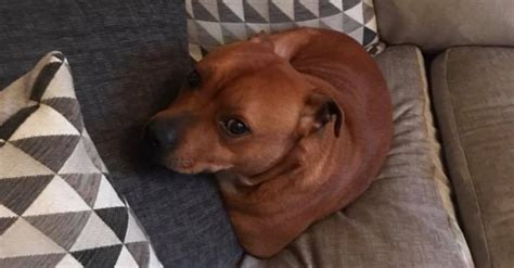 dog escapes backyard dog escapes backyard dog escapes texas backyard somehow
