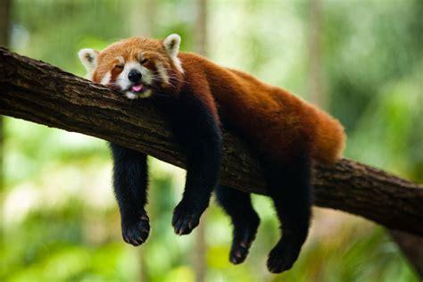 read panda panda 171 nat geo adventure