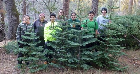 piper mountain christmas tree farm for sale annual scout tree sale at fork library news