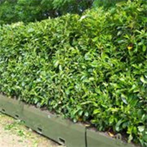 costo siepi da giardino costo siepe siepi quanto costa una siepe