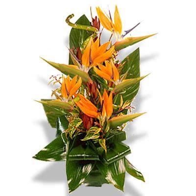 fiori sterlizie inviare fiori per onomastico regalare fiori per