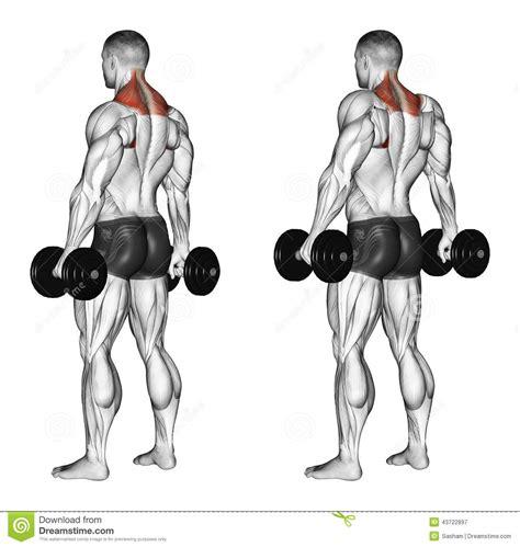 bench press shrug exercising shrugs with dumbbells stock illustration