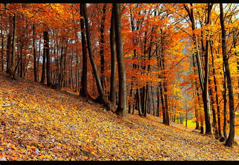 october color october colors by valiunic on deviantart