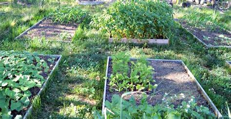 benefits of raised garden beds the many benefits of raised garden beds