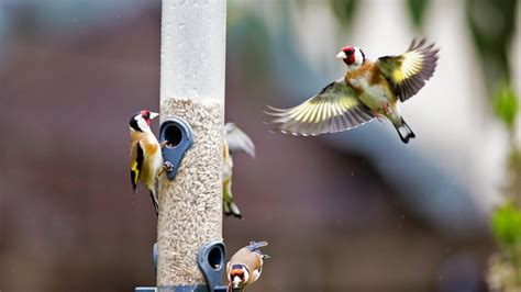 bird backyard best spot for bird lovers this weekend their backyards