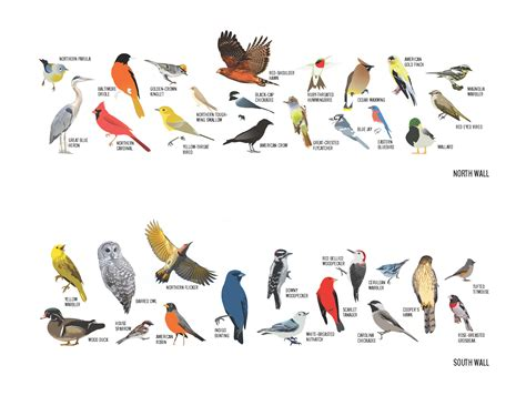 ohio bird mural learn about the birds you can see in