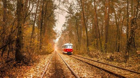 nature trees leaves vehicle tram railway rail yard