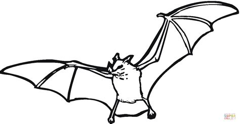 coloring page of a vire bat vire bat coloring page free 28 images bat color pages
