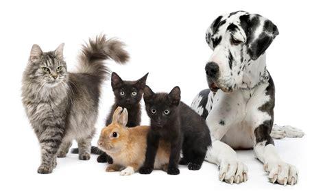 animal puppy animal logistics travel cargo ulkomaanmuutto muutto ulkomaille