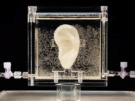 van gogh ear art imitates life replica of van gogh s ear created from