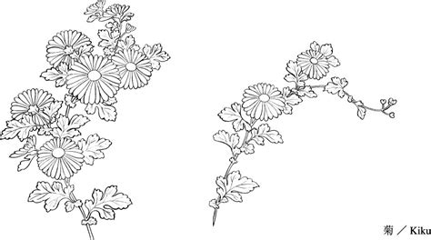 vector line drawing of flowers 31 chrysanthemum free