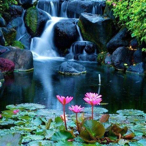 beautiful waterfalls with flowers beautiful waterfall and lotus flowers
