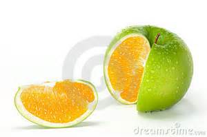 apple orange hybrid royalty free stock images image