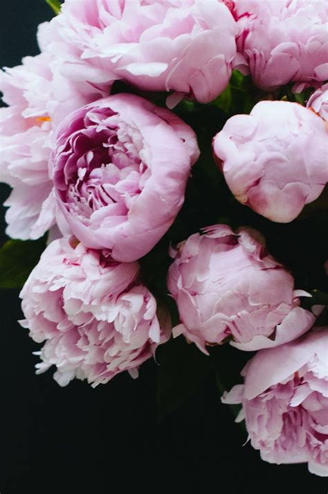 pink peonies pink peonies dreaming of spring pinterest beautiful