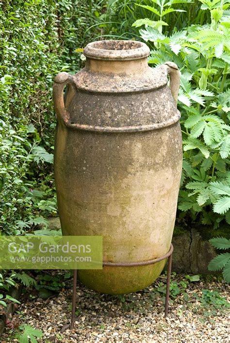 Olive Garden Southlands by Gap Gardens Olive Urn By Melianthus Major