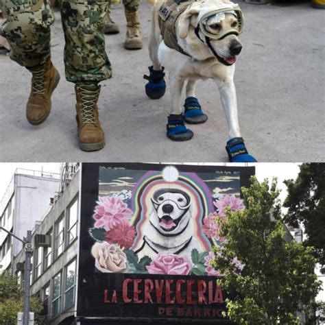frida the rescue frida the rescue now has own mural in mexico city trending on reddit