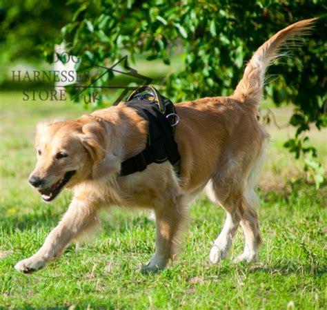 best harness for golden retriever labrador harness for walking sport 163 30 60