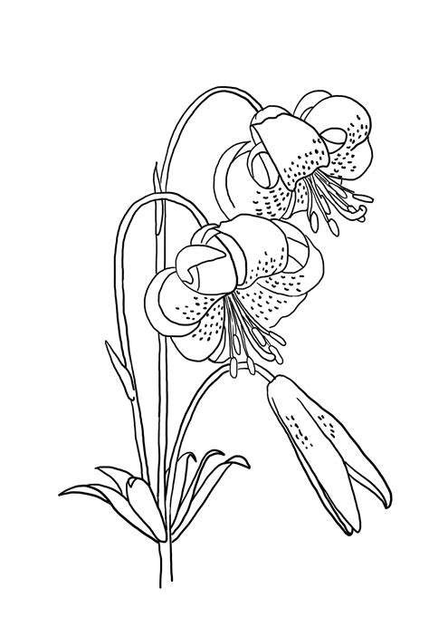 Sketches To Color by Flower Coloring Pages